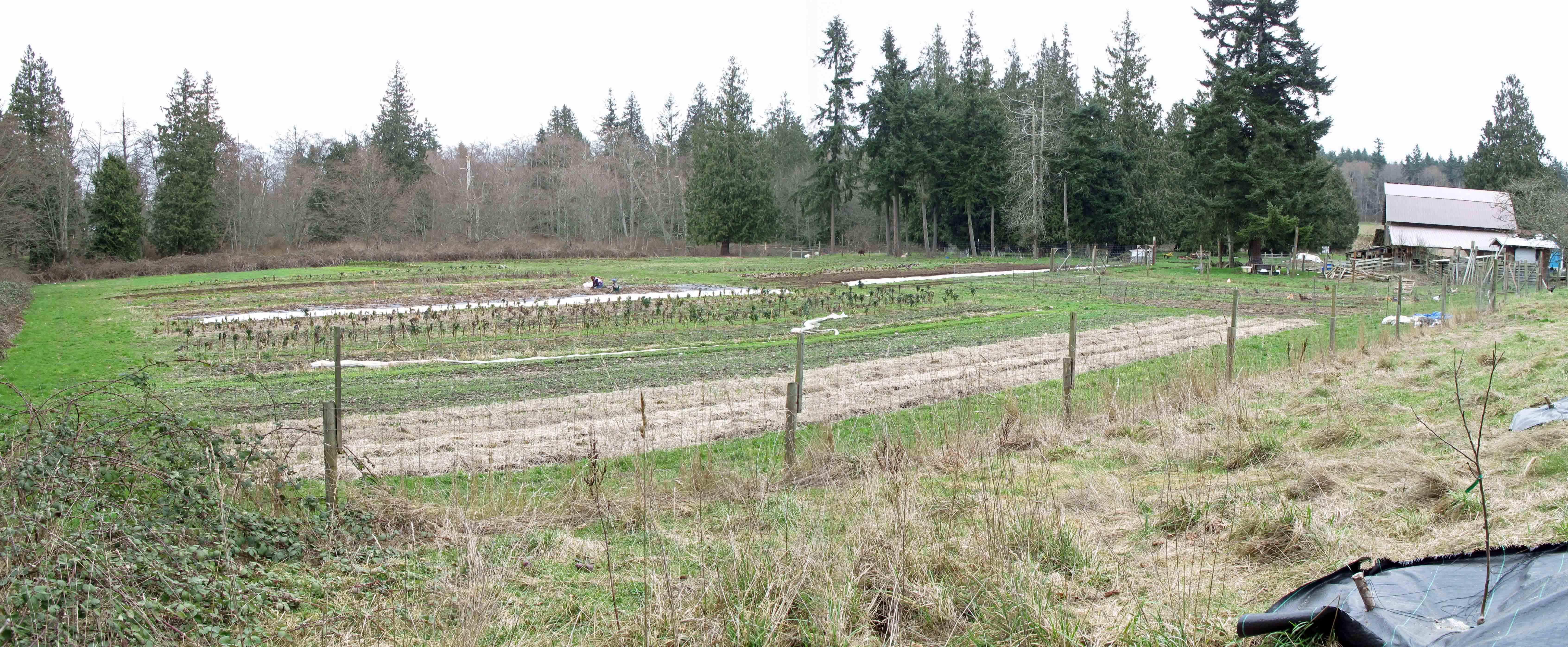 03-01-farmfield